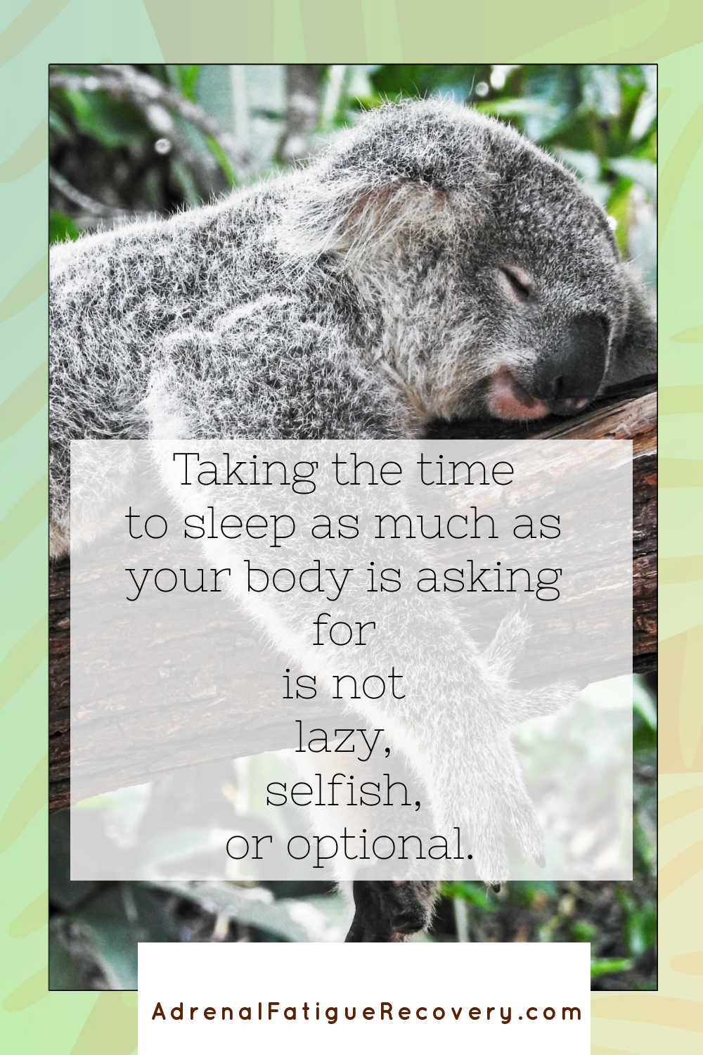 picture of koala napping on a branch with text overlay